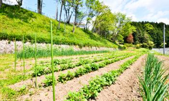 城山キャンパス 農園